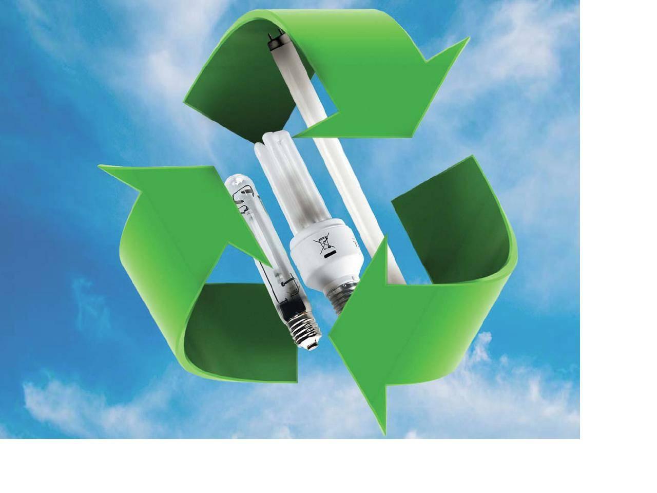 Becuri_reciclare_432452057f